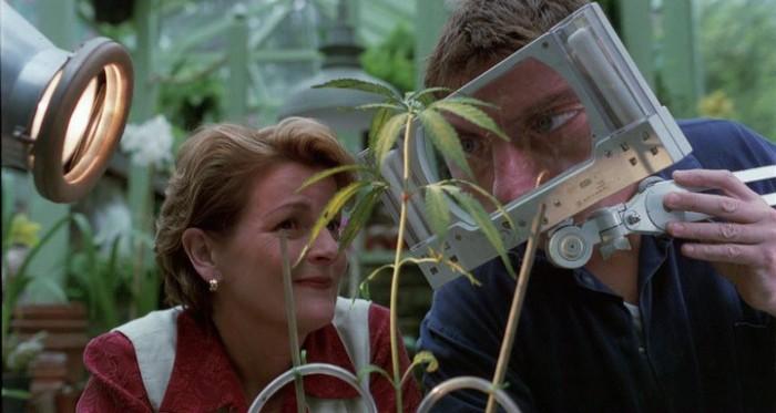 Комедийные фильмы про марихуану как определить пустоцвет конопли